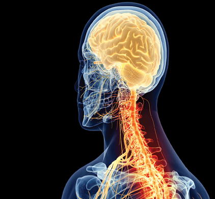 Neurological & Neurosurgical Services